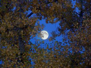Фотографируем пейзаж с луной