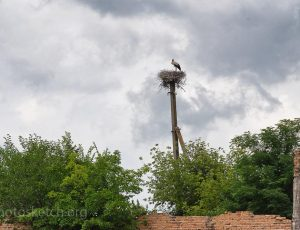 Гнездо аиста. Тайная миссия
