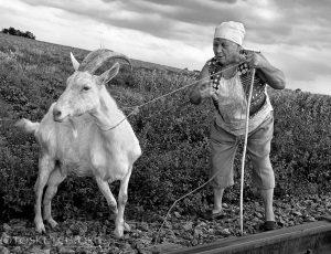 как содержать козу
