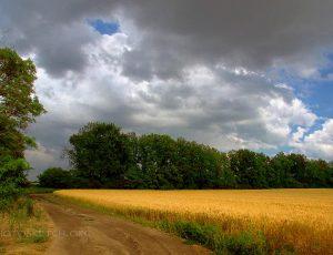 тучи над полем