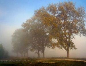 туман в поле