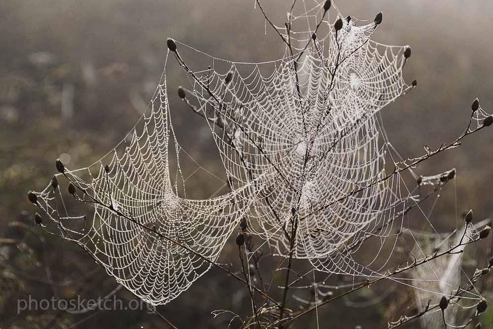 осенние паутинки
