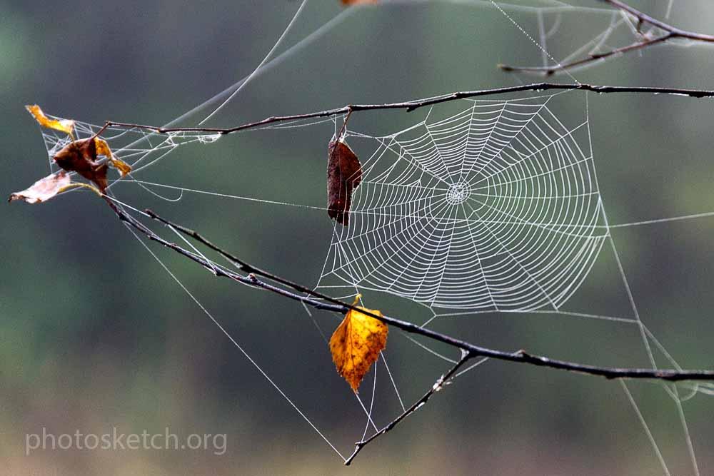 паутинка с осенним листочком