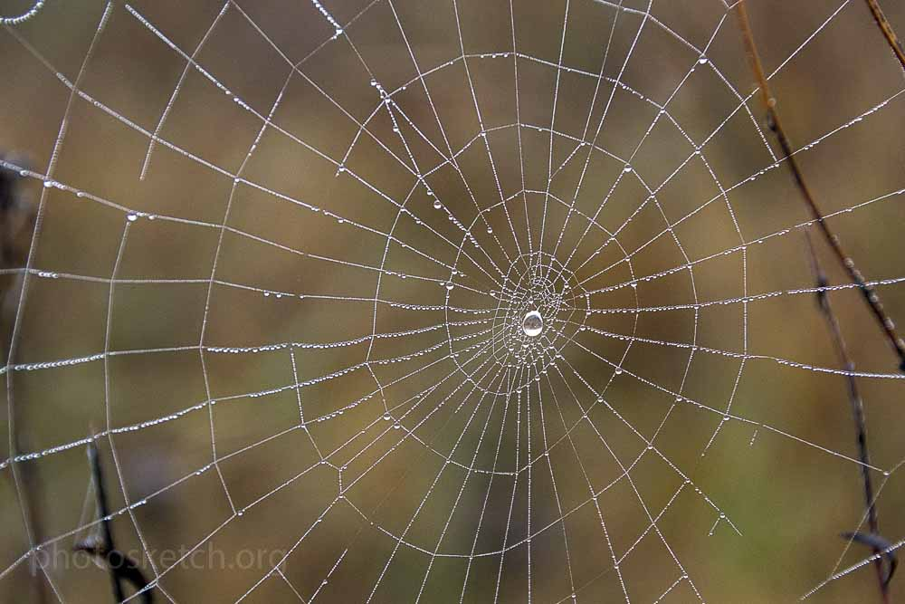 паутинка с капелькой росы