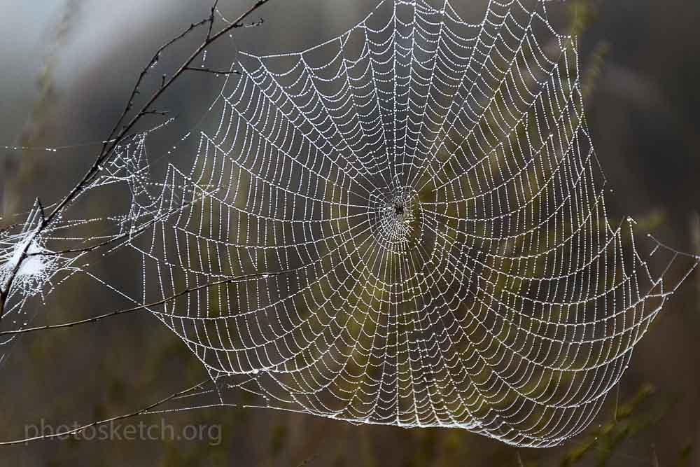 паутинка с пауком