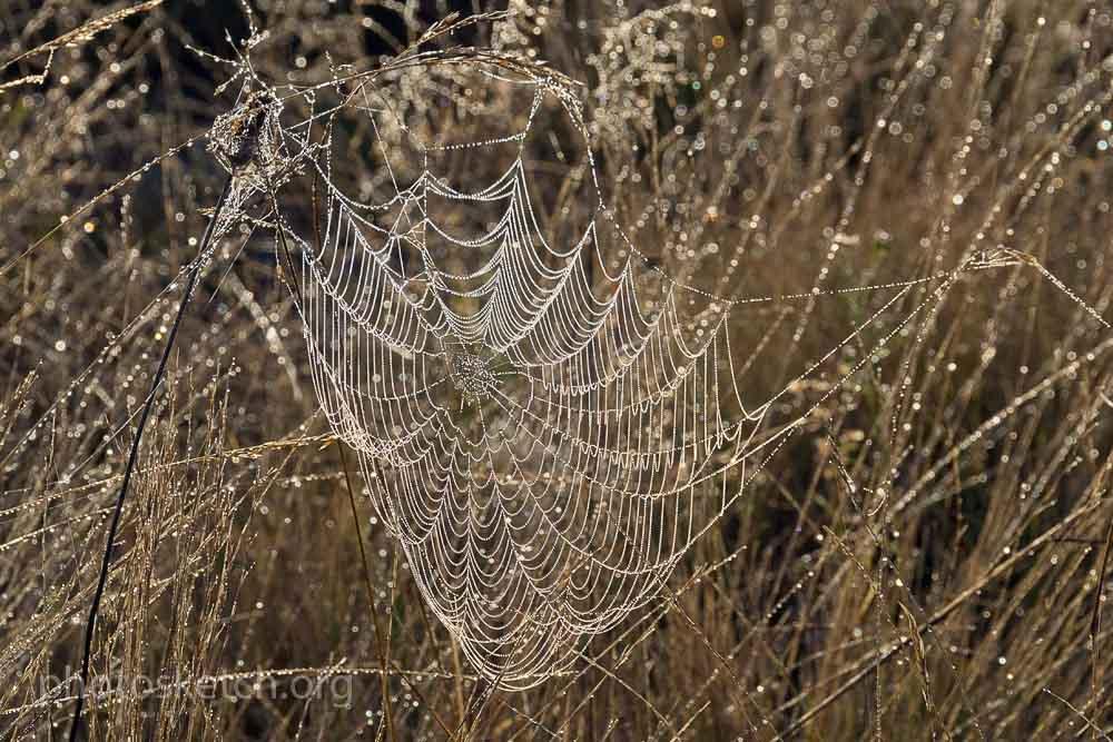 осенняя паутинка в траве