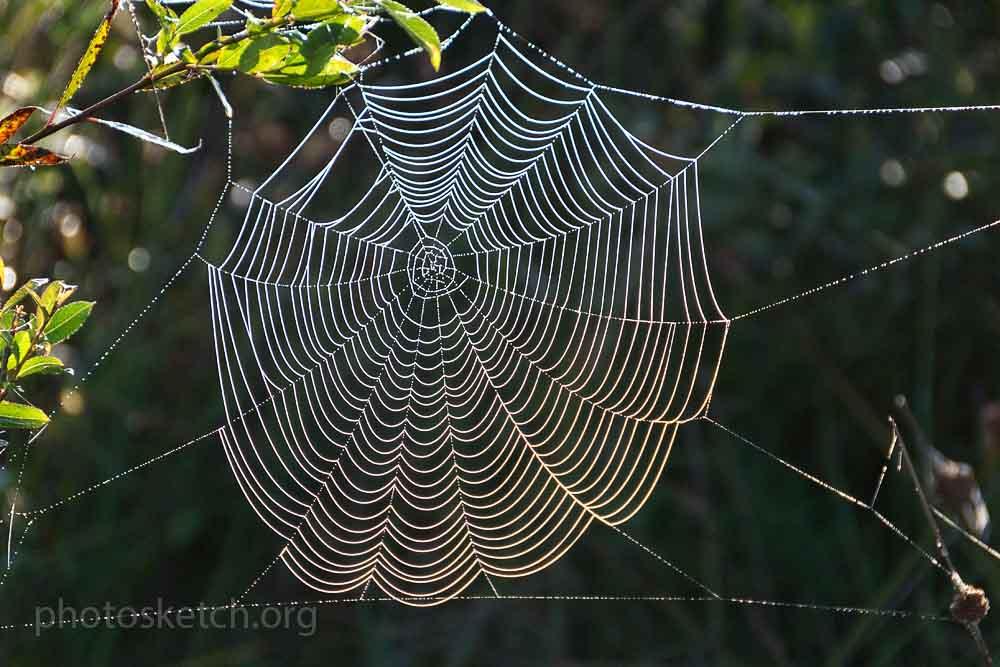 просто паутинка