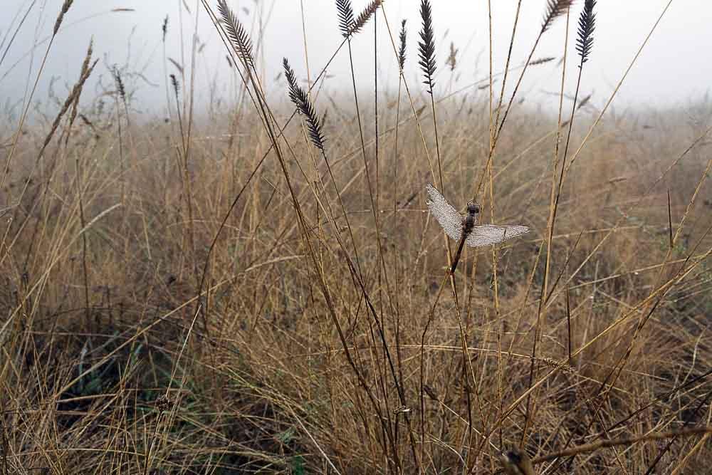 стрекоза в осенней траве