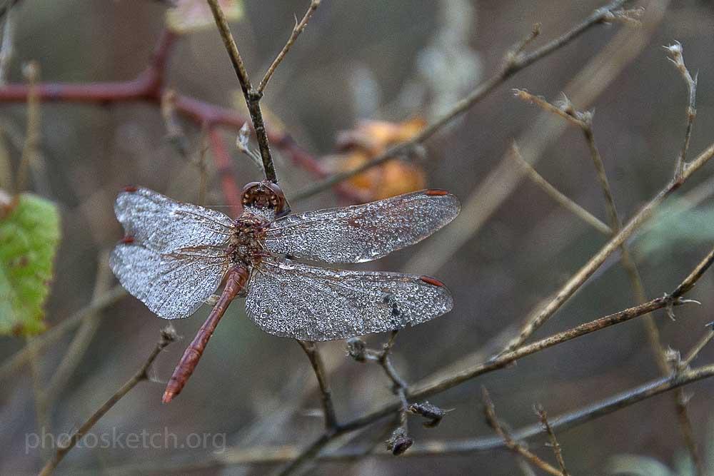 стрекоза среди травы и листьев