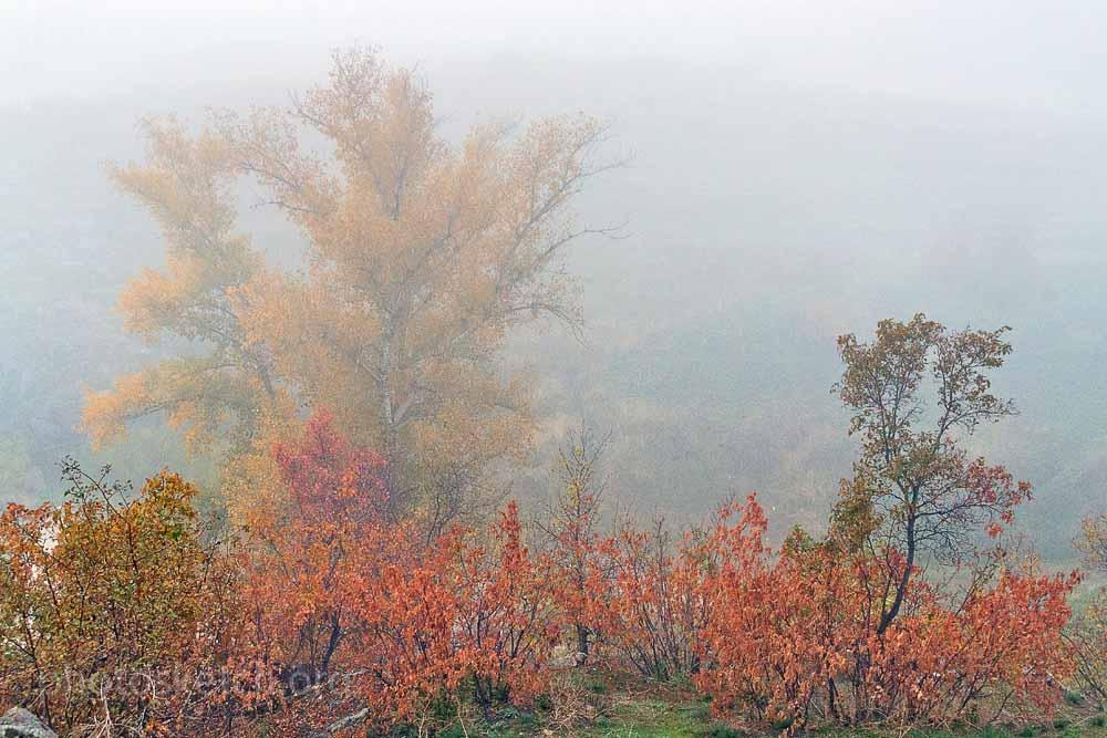легкий утренний туман стелящийся над водой, и сквозь который проглядывает восходящее солнце