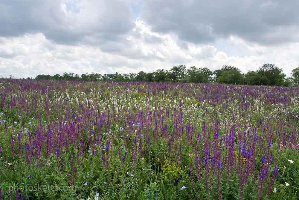 Красивее всего здесь конечно весной и в начале лета, когда степь расцветает всевозможными красками полевых цветов