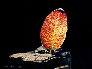как можно творчески использовать эффекты естественного освещения при съемке различных макрообъектов: цветов, листьев, насекомых