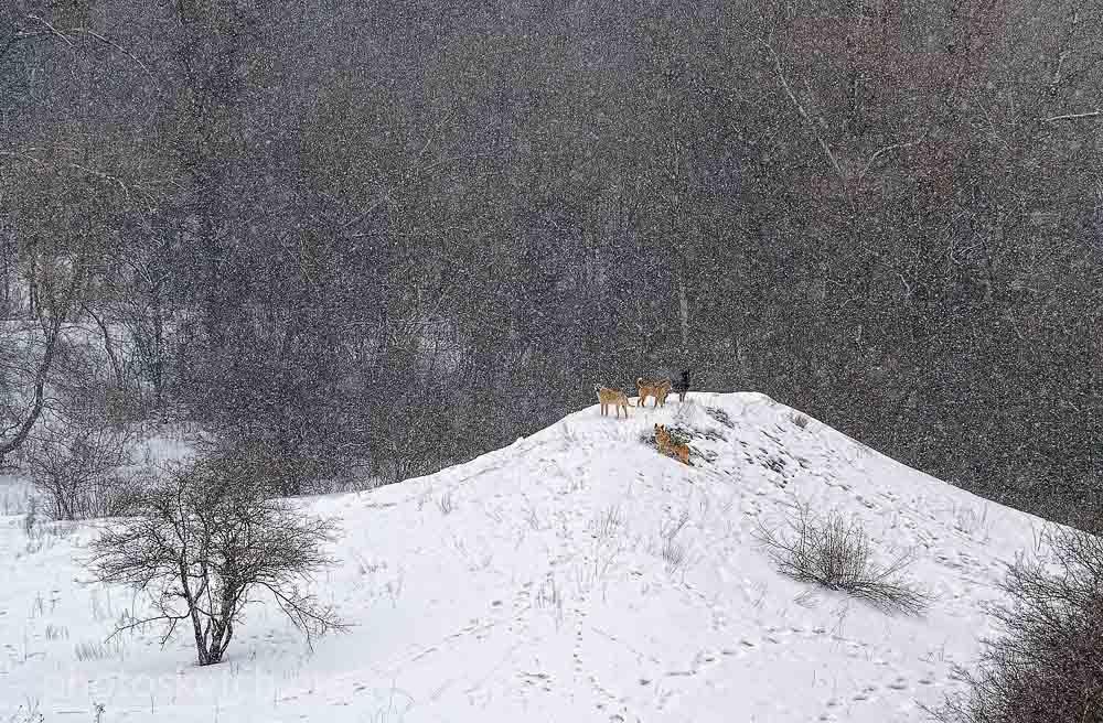 Застывшие снежинки, светлые точки или кружки, расположены отдельно друг от друга. Это бывает красиво если съемка велась во время сильного снегопада, когда снежинок много, и скорость их полета невысока, снег идет без ветра, падает вертикально