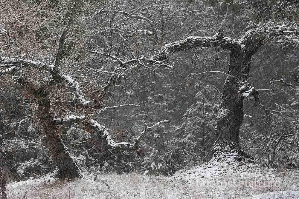 2.Летящие снежинки, в кадре будут в виде светлых линий, коротких или длинных. Летящие снежинки хороши когда мы хотим добавить динамику, усилить оптическую перспективу в кадре, передать глубину, показать метель, чувство зимней стужи. Если снегопад слабый, то такой способ может усилить чувство сильной метели.